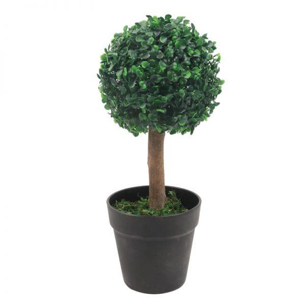 Planta buxus ornamental in ghiveci