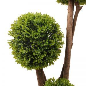 Buxus ornamental cu bile verzi