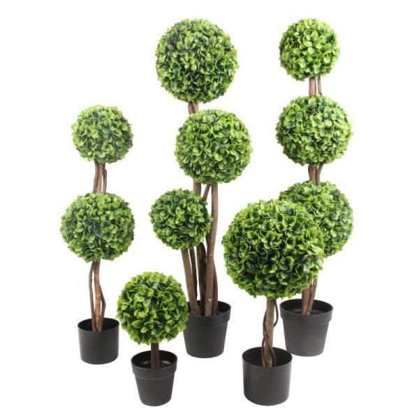 Arbusti ornamentali pentru gradina, casa, hotel, cabinet medical,